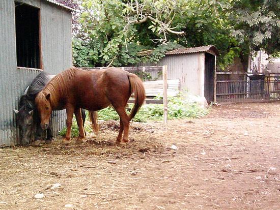 Cavalli a Borghetto