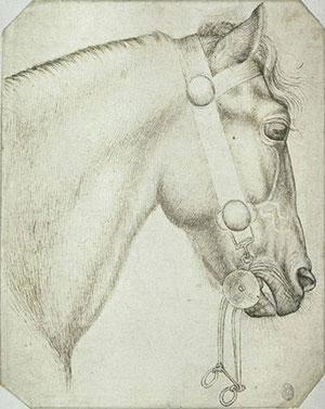 Studio per la testa di un cavallo
