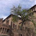 Fontanellato e la Rocca Sanvitale