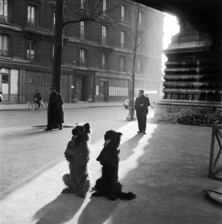 Robert Doisneau, Les chiens de la Chapelle