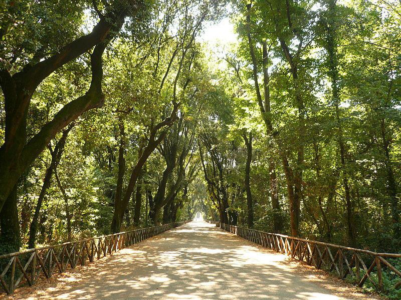 Adottare una panchina, un albero o una fontanella al Real Bosco di Capodimonte