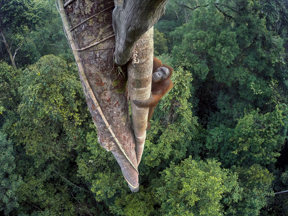 Wildlife Photographer of the Year: a Milano la più prestigiosa mostra mondiale di foto della natura