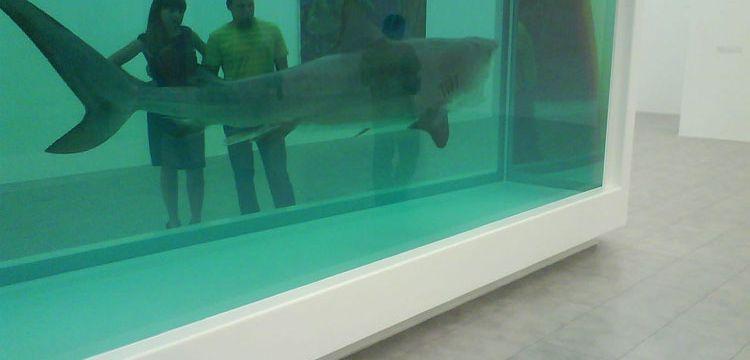 Quanti animali sono morti per le opere di Damien Hirst? Una stima di Artnet