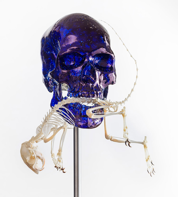 Jan Fabre, Skull with squirrel