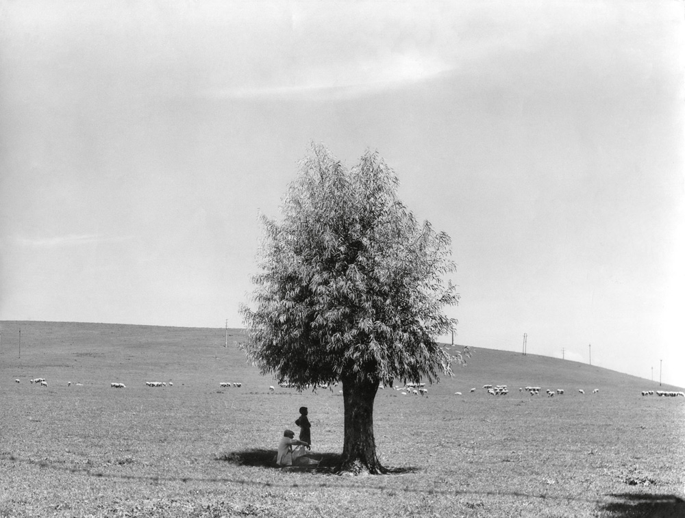 Fulvio Roiter, L'uomo e l'albero, 1950 © Archivio Storico Circolo Fotografico La Gondola Venezia