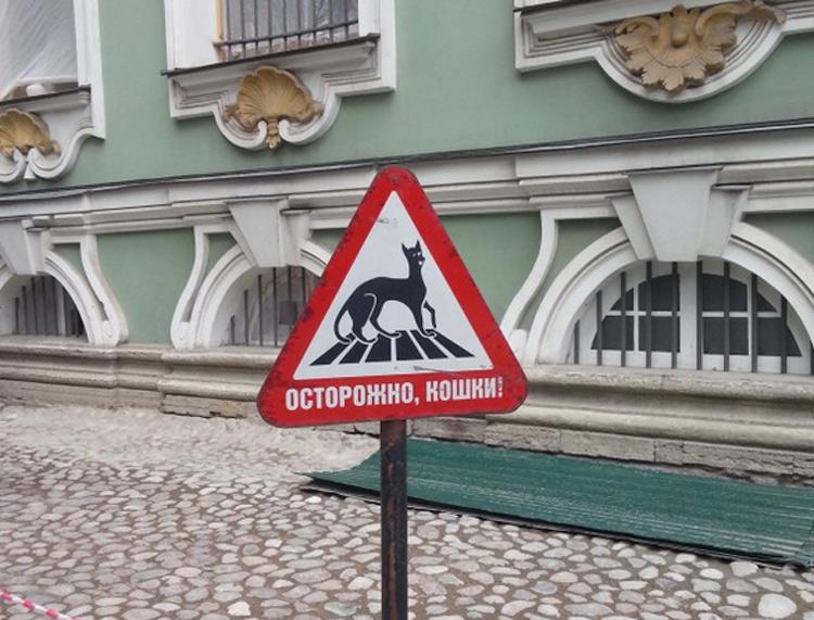 Il cartello Attenzione gatti