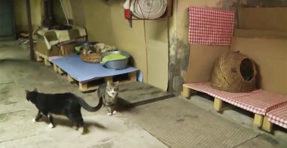 I gatti nei loro appartamenti sotterranei. Credit CBC Moscow
