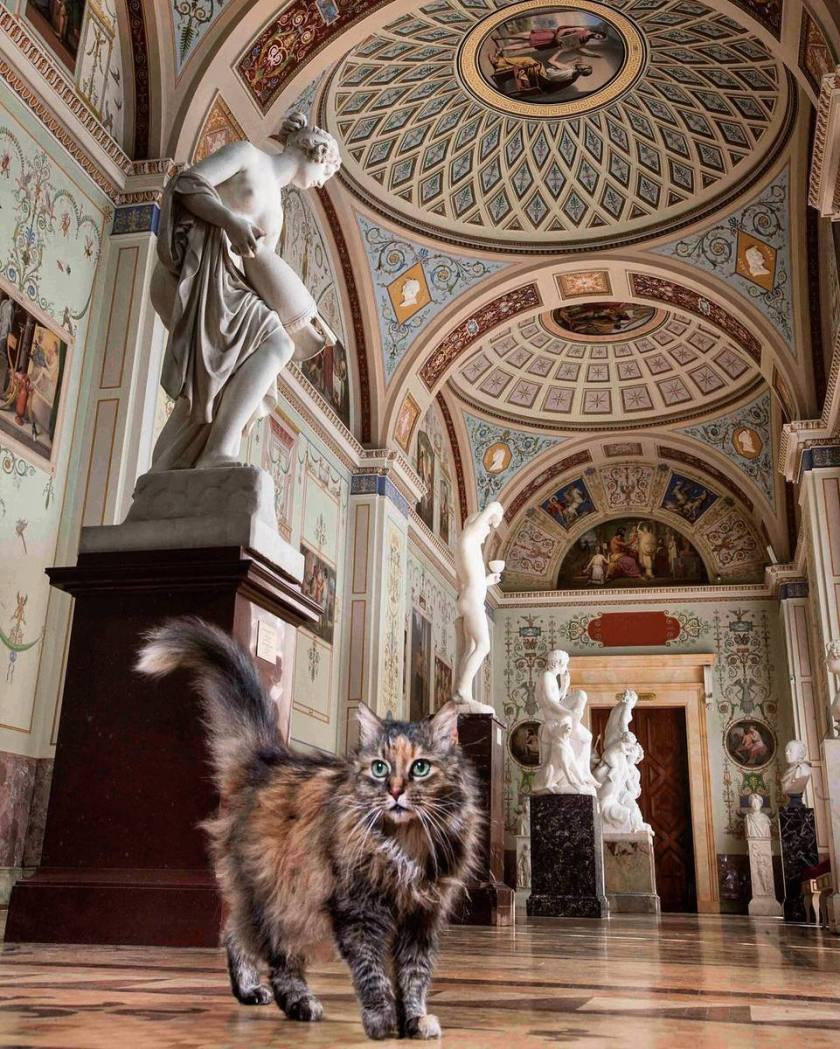 Gatto dell'Hermitage di San Pietroburgo