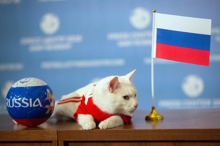 Il gatto Achille. Ph. Credit Agenzia TASS