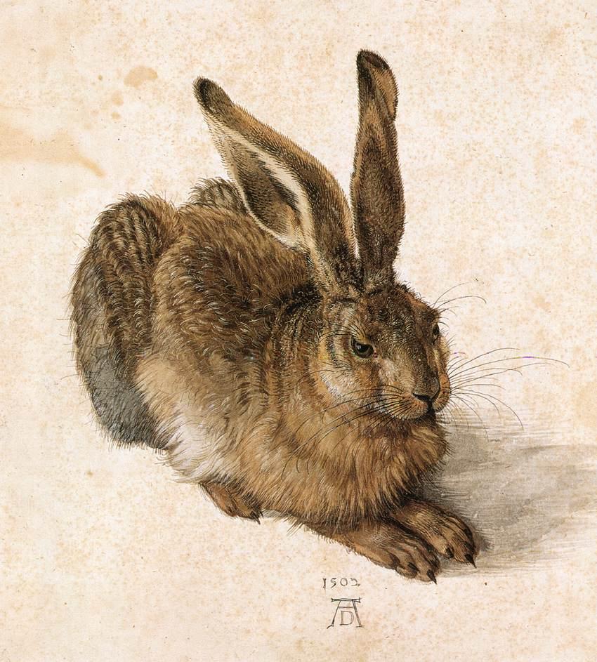 Albrecht Dürer, Lepre (1502; acquerello su carta, 251 x 226 mm; Vienna, Graphische Sammlung Albertina)