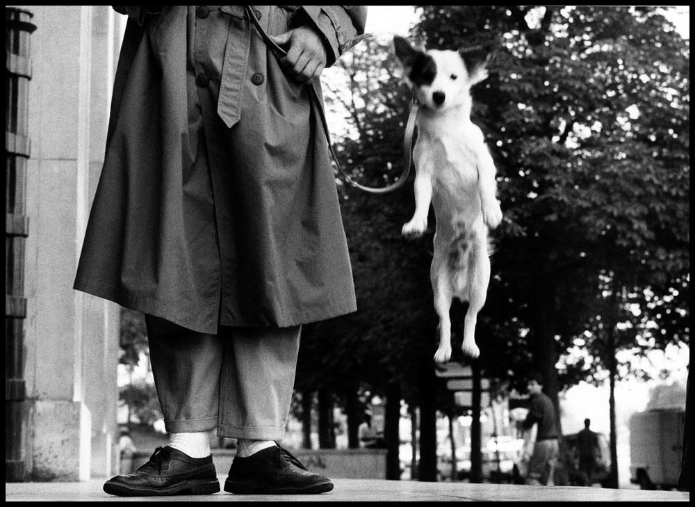 In programma a Treviso la mostra dedicata ai cani di Elliott Erwitt