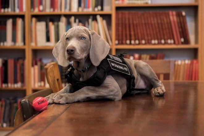 Il nuovo conservatore del Museum of Fine Arts di Boston è... un cane!