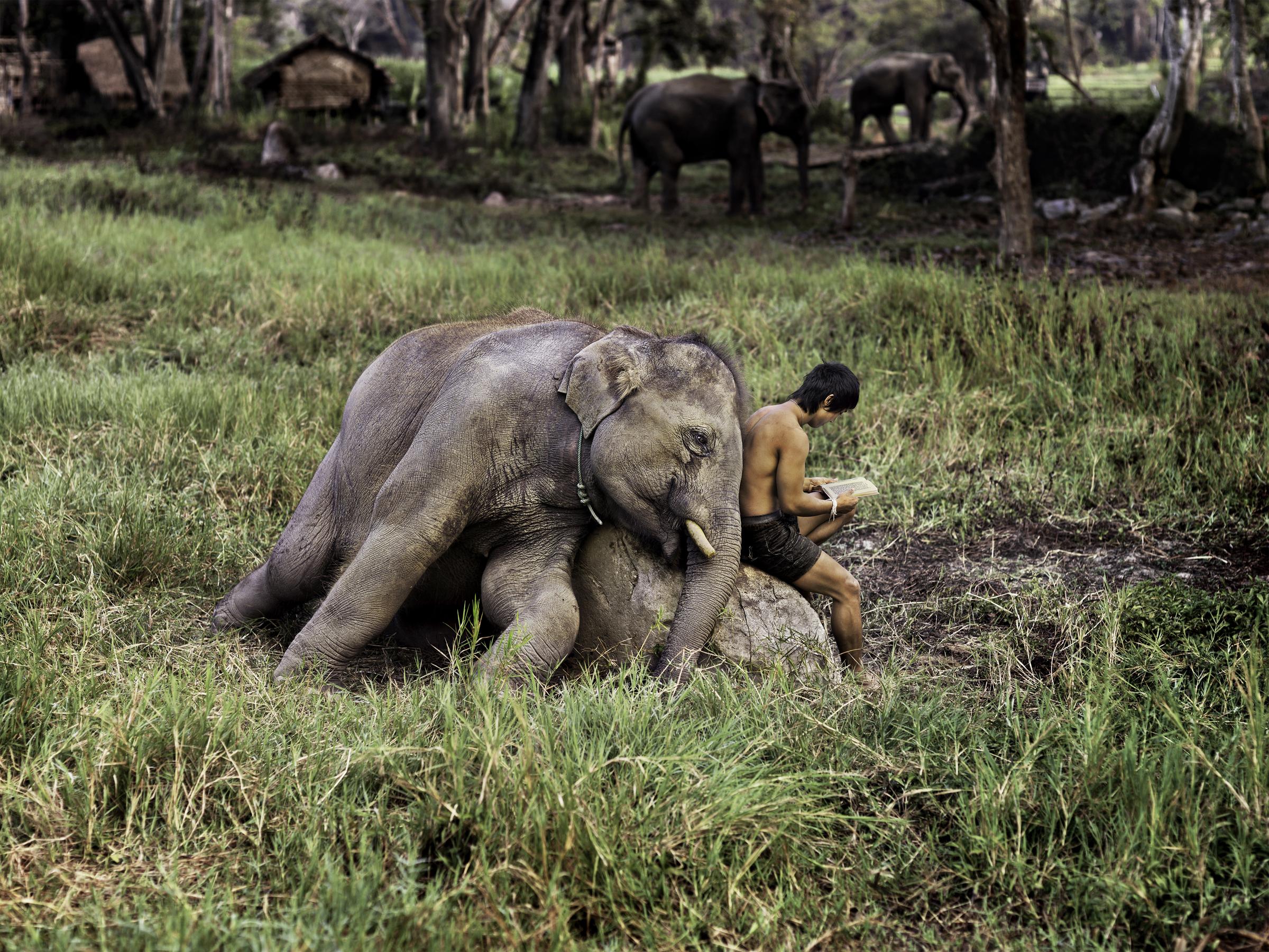 """Gli animali secondo Steve McCurry sono al MUDEC con l'inedita mostra """"Animals"""""""