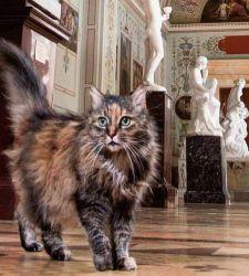 I gatti dell'Hermitage, i fedeli e simpatici guardiani del museo dall'epoca di Pietro il Grande