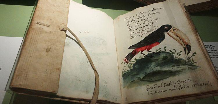 Alla scoperta di mondi sconosciuti con i viaggiatori del passato: a Modena meravigliose avventure attraverso i libri