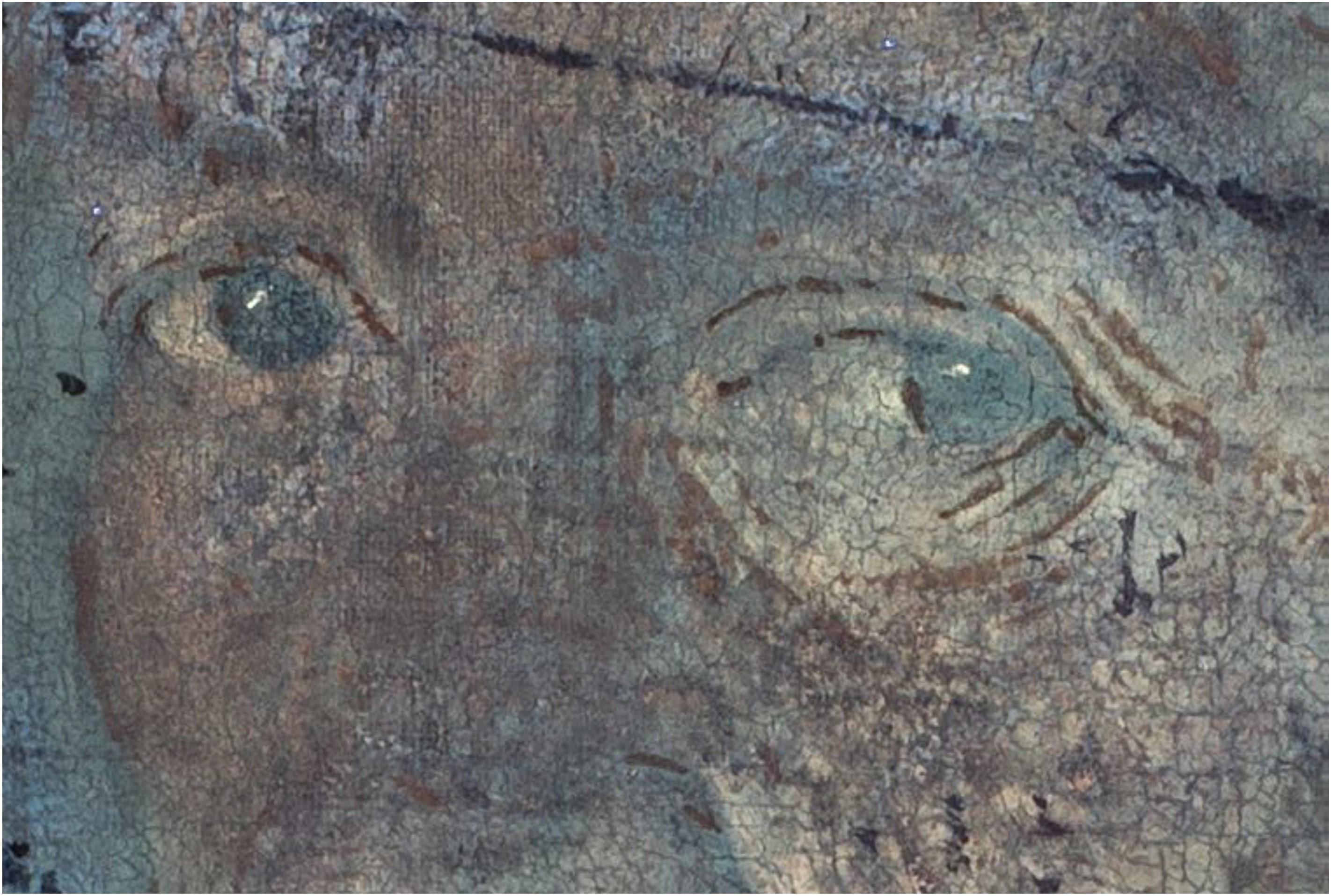 Giorgione, La Vecchia, macrofotografie degli occhi in UV
