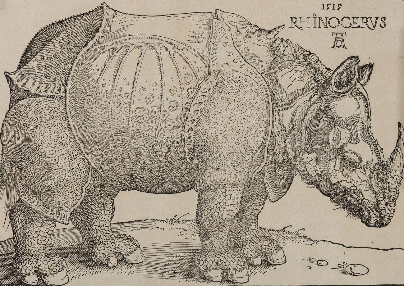 Albrecht Dürer, Rinoceronte (1515; xilografia, 215 x 230 mm; Bassano del Grappa, Musei Civici)