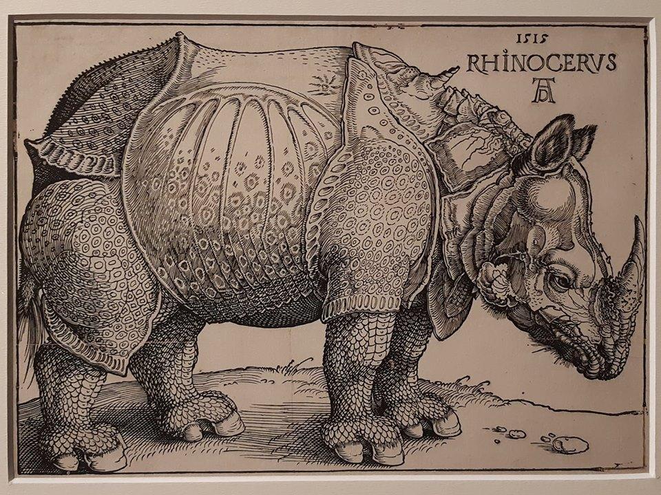 Albrecht Dürer, Rinoceronte (1515; xilografia, 212 x 298 mm inciso, 221 x 306 mm foglio; esemplare di ottava edizione, tiratura del XVII secolo; Collezione privata)