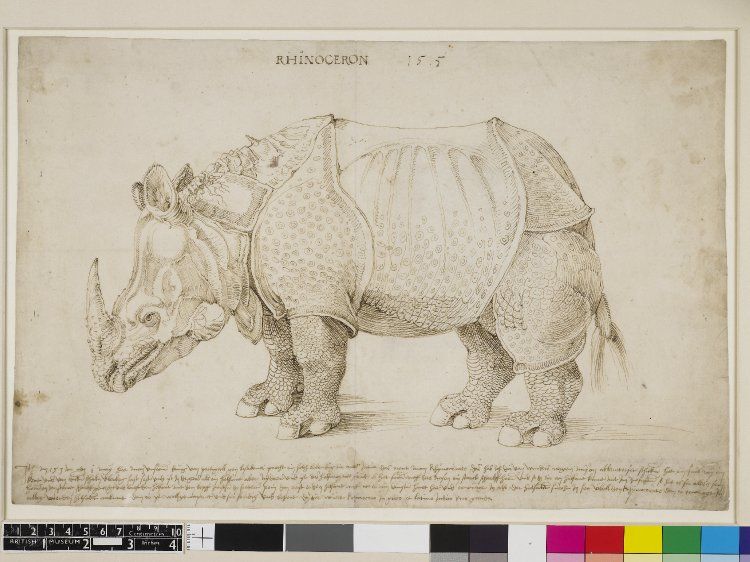 Albrecht Dürer, Rinoceronte, disegno preparatorio (1515; penna e inchiostro bruno su carta, 274 x 420 mm; Londra, British Museum)