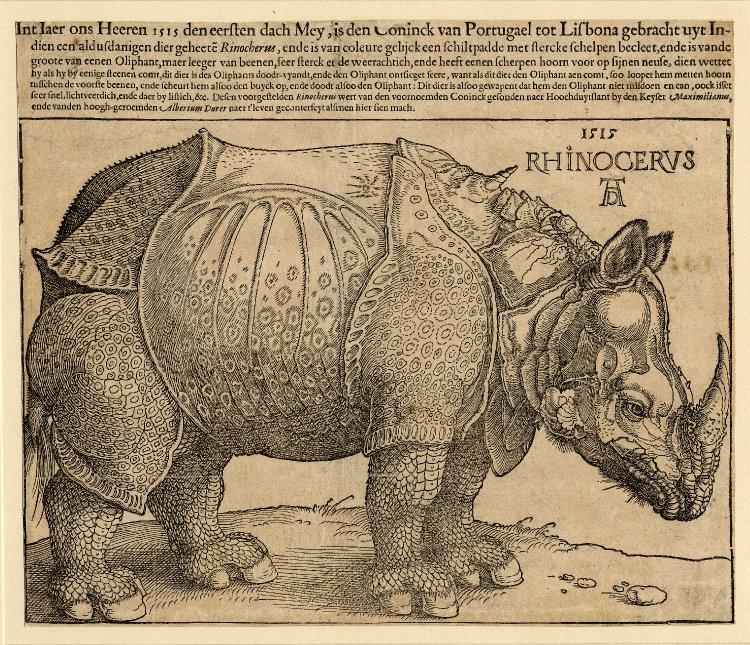 Albrecht Dürer, Rinoceronte (1515; xilografia, 214 x 299 inciso, 254 x 303 mm foglio, esemplare con iscrizione in olandese dalla sesta edizione pubblicata all'Aia nel 1620 circa; Londra, British Museum)