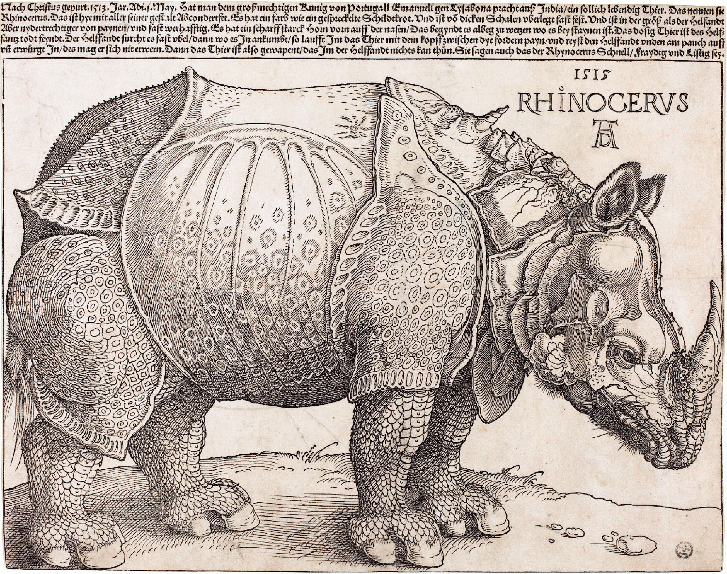 Albrecht Dürer, Rinoceronte (1515; xilografia, 235 x 298 mm; Washington, National Gallery of Art)