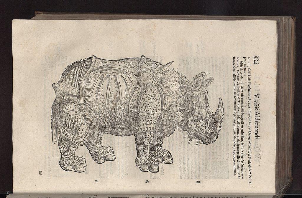 Il rinoceronte illustrato nella Quadrupedum omnium bisulcorum historia di Ulisse Aldrovandi (pubblicata nel 1621)