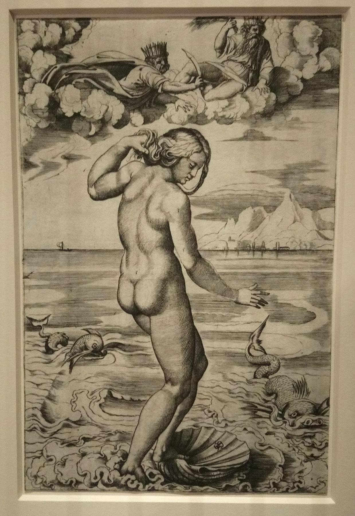 Marco Dente da Ravenna (da Raffaello), Venere Anadiomene (1516 circa; incisione a bulino, 262 x 172 mm; Vienna, Albertina)