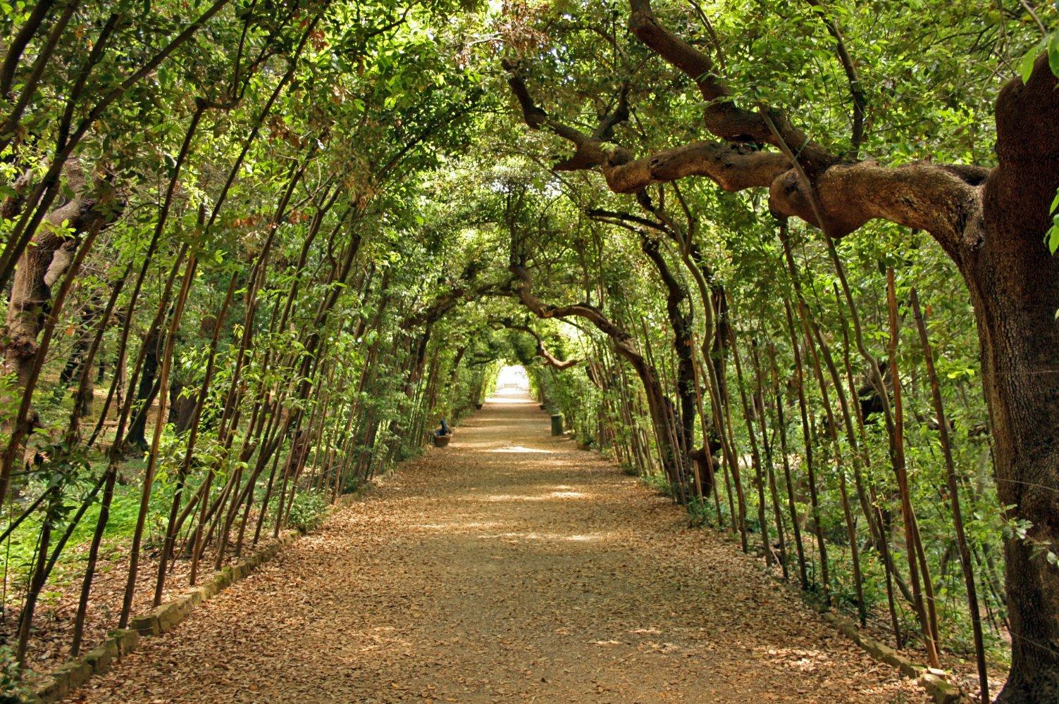 Firenze, mediatori stranieri illustreranno le piante esotiche nei giardini storici della città