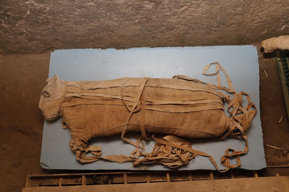 Egitto, a Saqqara ritrovate mummie di gatti e leoni. Scoperte anche 75 statue di gatti e altri animali