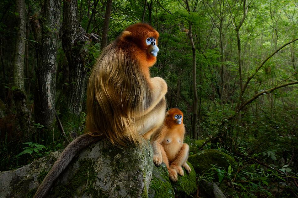 Milano, torna il tradizionale appuntamento annuale con la mostra del Wildlife Photographer of the Year