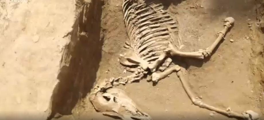 Rinvenuta a Milano una necropoli: c'è anche lo scheletro di un cavallo