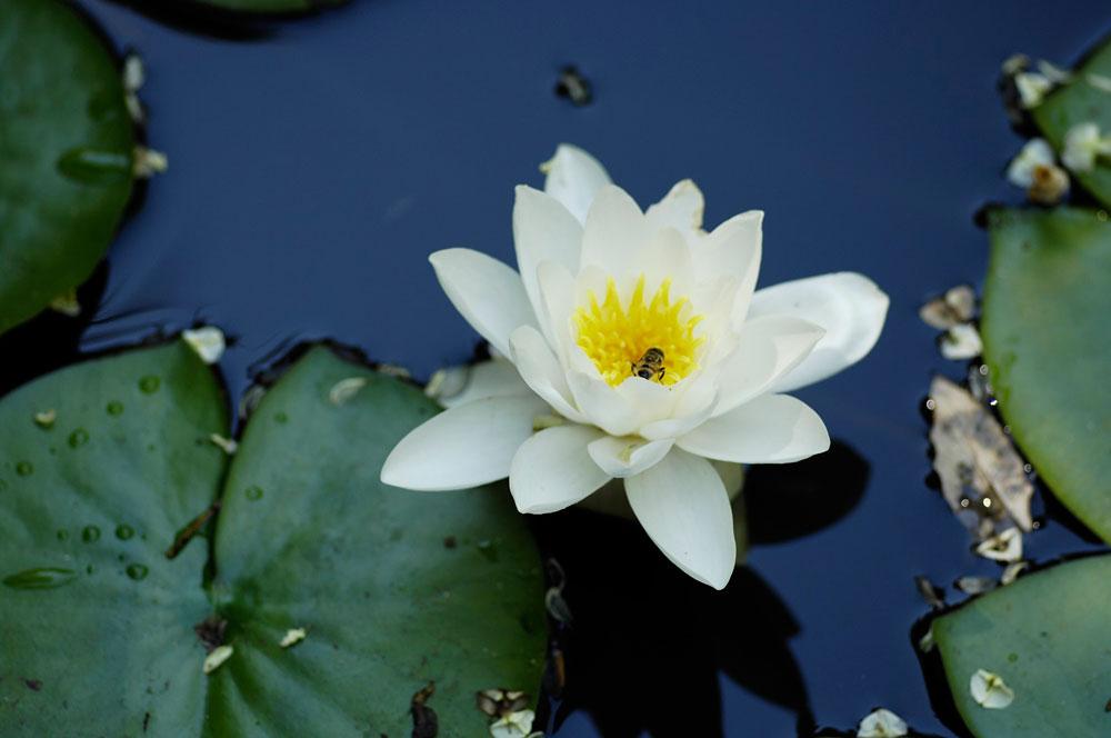 Boboli in fiore: tour guidati alla scoperta di orchidee, rose, ninfee e agrumi