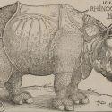 Il Rinoceronte di Albrecht Dürer. Origine e fortuna del pachiderma più famoso della storia dell'arte