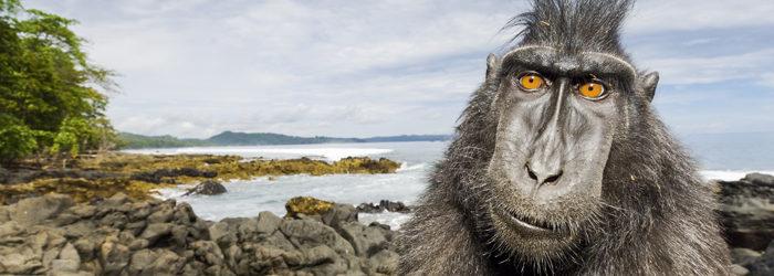 Le spettacolari fotografie di animali di Stefano Unterthiner sono in mostra al Forte di Bard