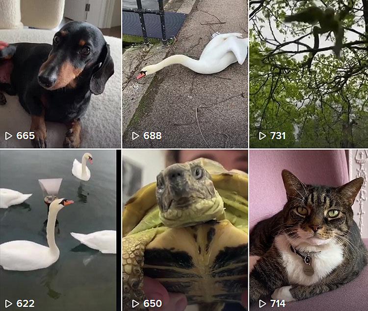 Obrist parla con gli animali: su Tik Tok le sue interviste d'arte... alle bestiole