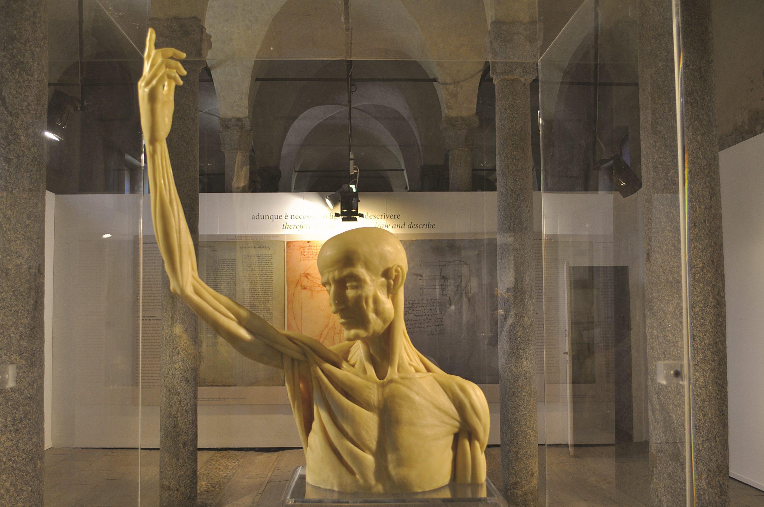 Milano, la Biblioteca Ambrosiana mette a confronto Leonardo da Vinci e Guido da Vigevano e le loro anatomie in figure