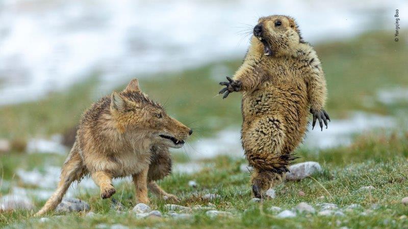 Forte di Bard: torna l'anteprima italiana del Wildlife Photographer of the Year.