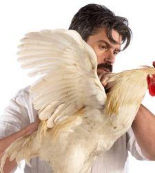 Quando un pollo diventa un'innovativa opera d'arte. Intervista a Koen Vanmechelen