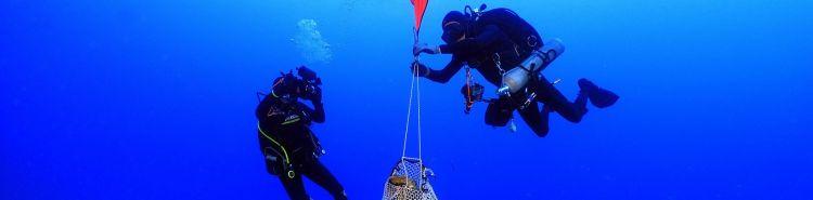 Collezionismo subacqueo: cosa sapere per acquisire reperti archeologici trovati in mare?